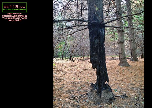 20160613_woods_fire_ernest
