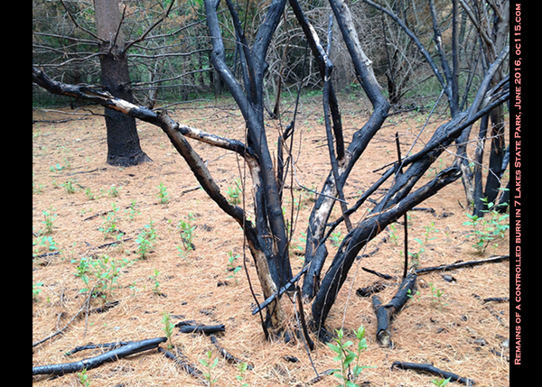 20160613_woods_fire_ftft
