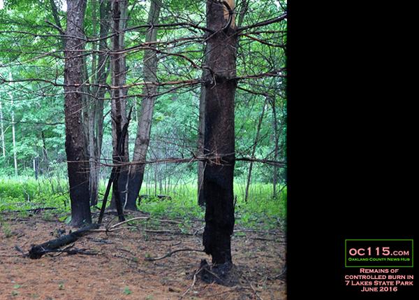 20160613_woods_fire_half burned trunk
