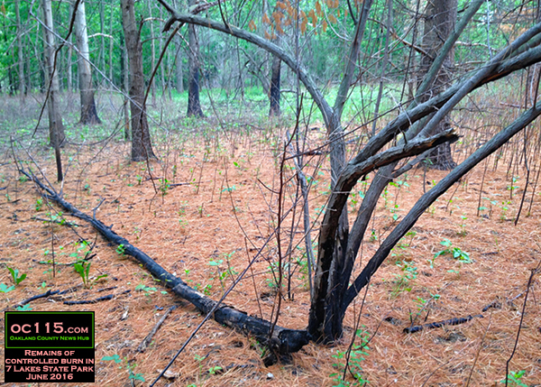 20160613_woods_fire_red