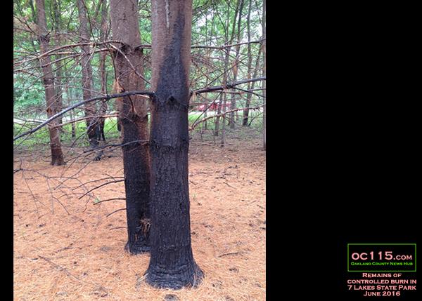 20160613_woods_fire_xlxl