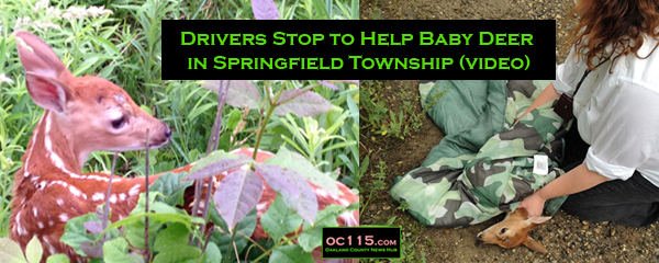 201606_Drivers Stop to Help Baby Deer in Springfield Township_title