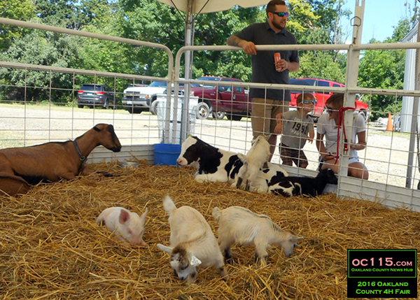 20160716_oakland county fair_0340_baby animals