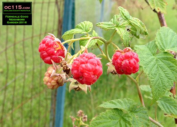 20161023_good-neighbors-garden_011