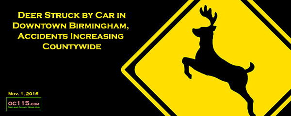 Michigan Car Deer Accidents By County