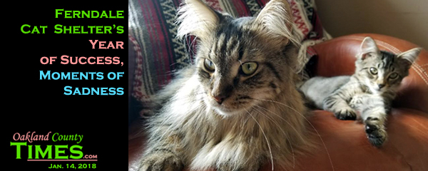 Ferndale Cat Shelter S Year Of Success Moments Of Sadness Oakland County Times