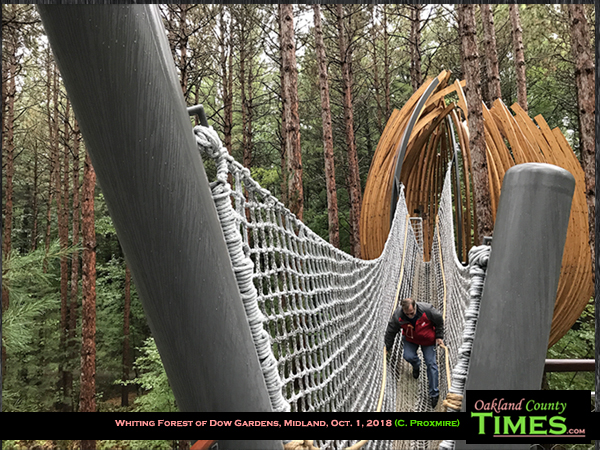 explore dow gardens whiting forest canopy walk in midland
